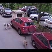 hundeattacke toyota rav4