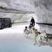 LandRoverDiscoveryVSSchlittenhunde